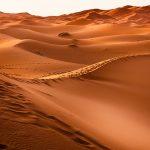 Genesis Quote: Forever Caught in Desert Lands