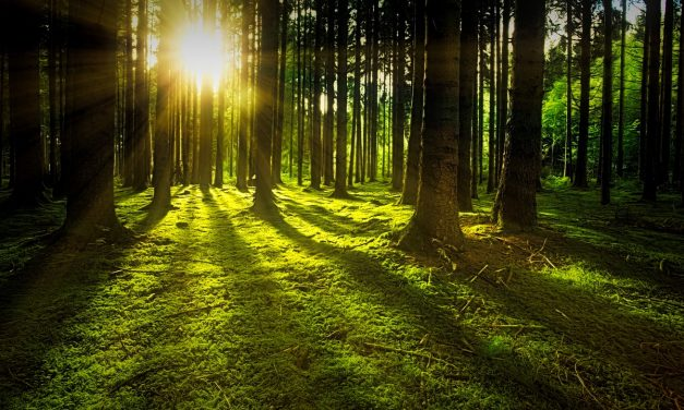 Peter Wohlleben – The Hidden Life of Trees